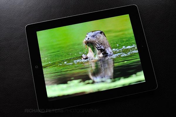 iPad 3 cũ màn hình sắc nét